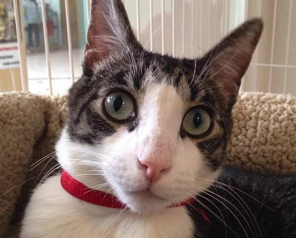 Spca annex cat
